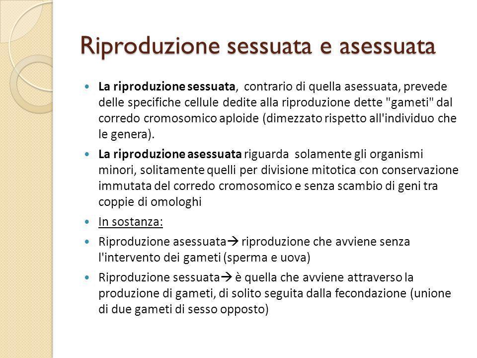 Riproduzione sessuata e asessuata