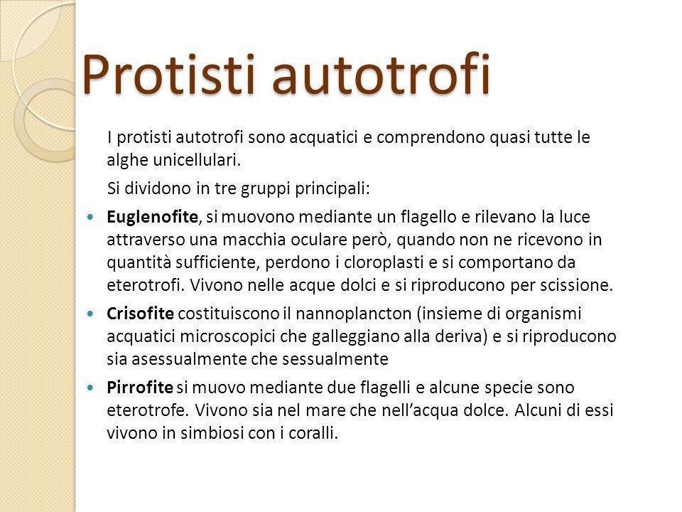 Protisti autotrofi I protisti autotrofi sono acquatici e comprendono quasi tutte le alghe unicellulari.