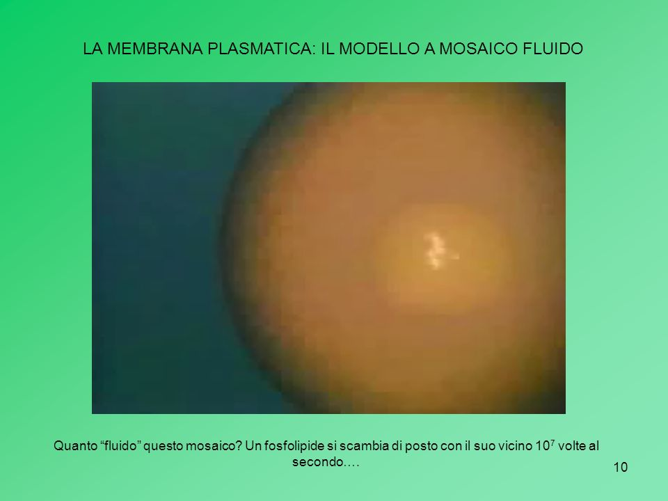 LA MEMBRANA PLASMATICA: IL MODELLO A MOSAICO FLUIDO