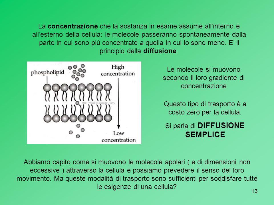 Le molecole si muovono secondo il loro gradiente di concentrazione