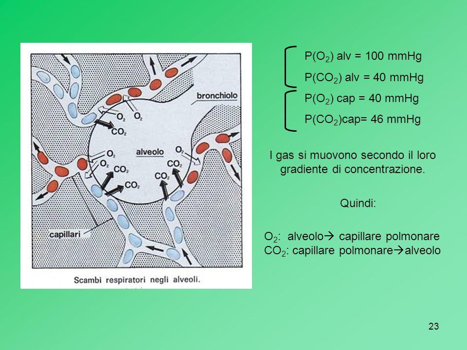 I gas si muovono secondo il loro gradiente di concentrazione.