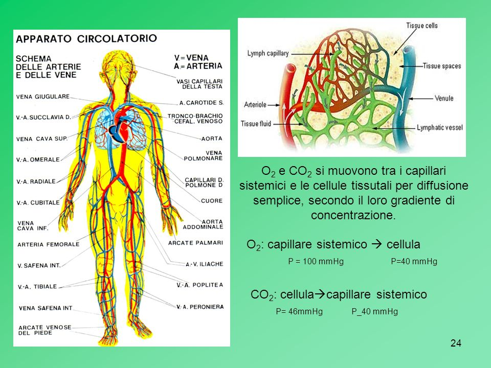 O2: capillare sistemico  cellula