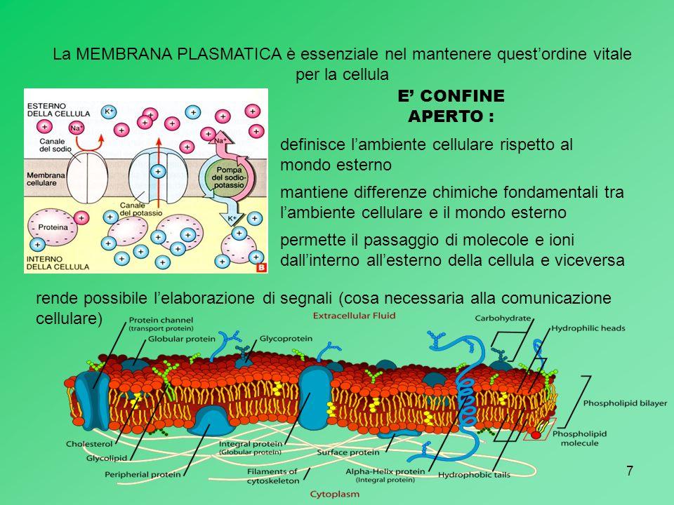 La MEMBRANA PLASMATICA è essenziale nel mantenere quest'ordine vitale per la cellula