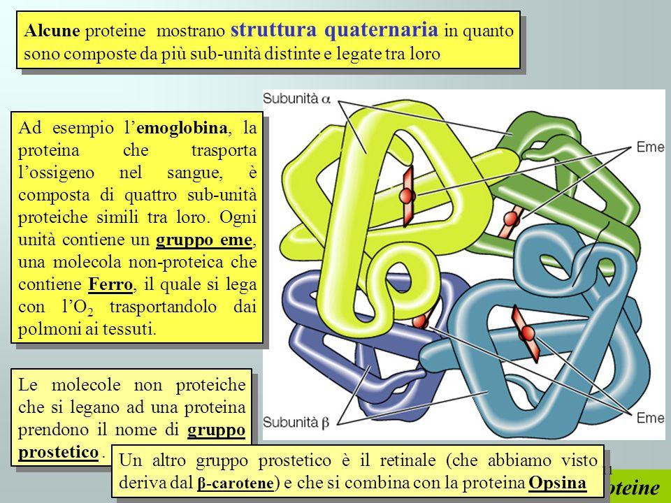 Alcune proteine mostrano struttura quaternaria in quanto sono composte da più sub-unità distinte e legate tra loro