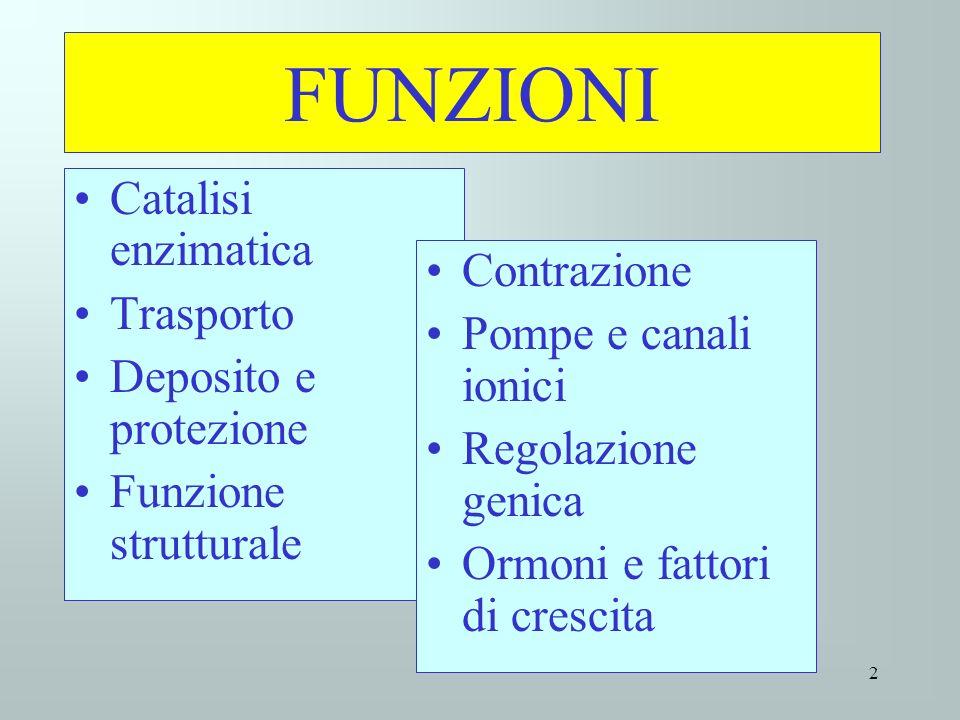 FUNZIONI Catalisi enzimatica Trasporto Contrazione