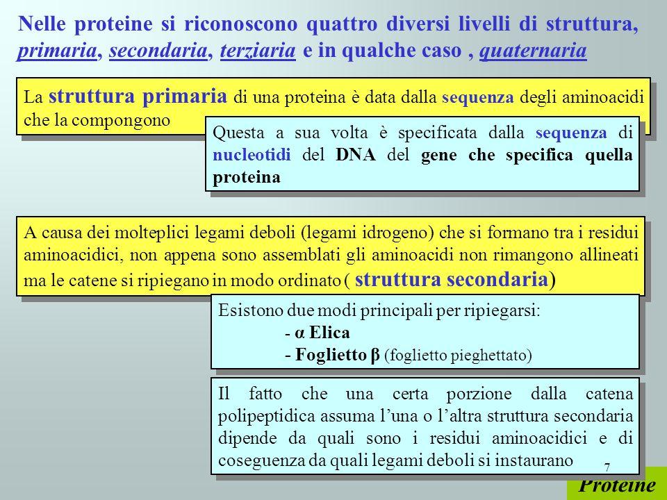 Nelle proteine si riconoscono quattro diversi livelli di struttura, primaria, secondaria, terziaria e in qualche caso , quaternaria