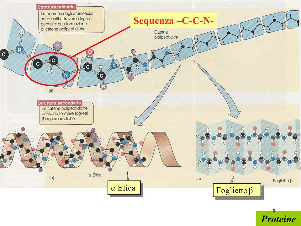 Sequenza –C-C-N- α Elica Foglietto β Proteine