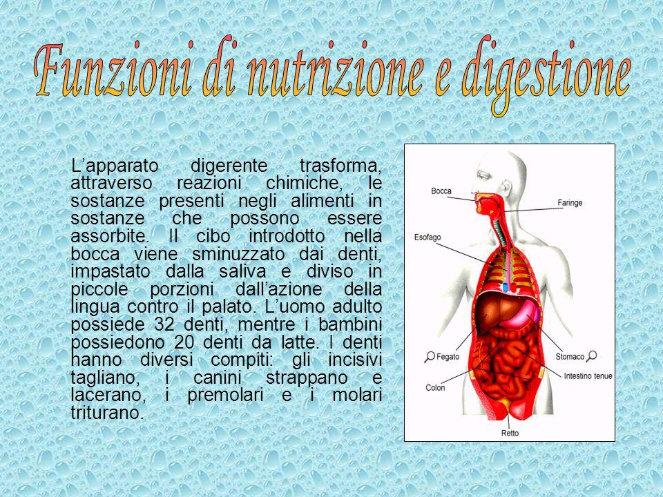 Funzioni di nutrizione e digestione