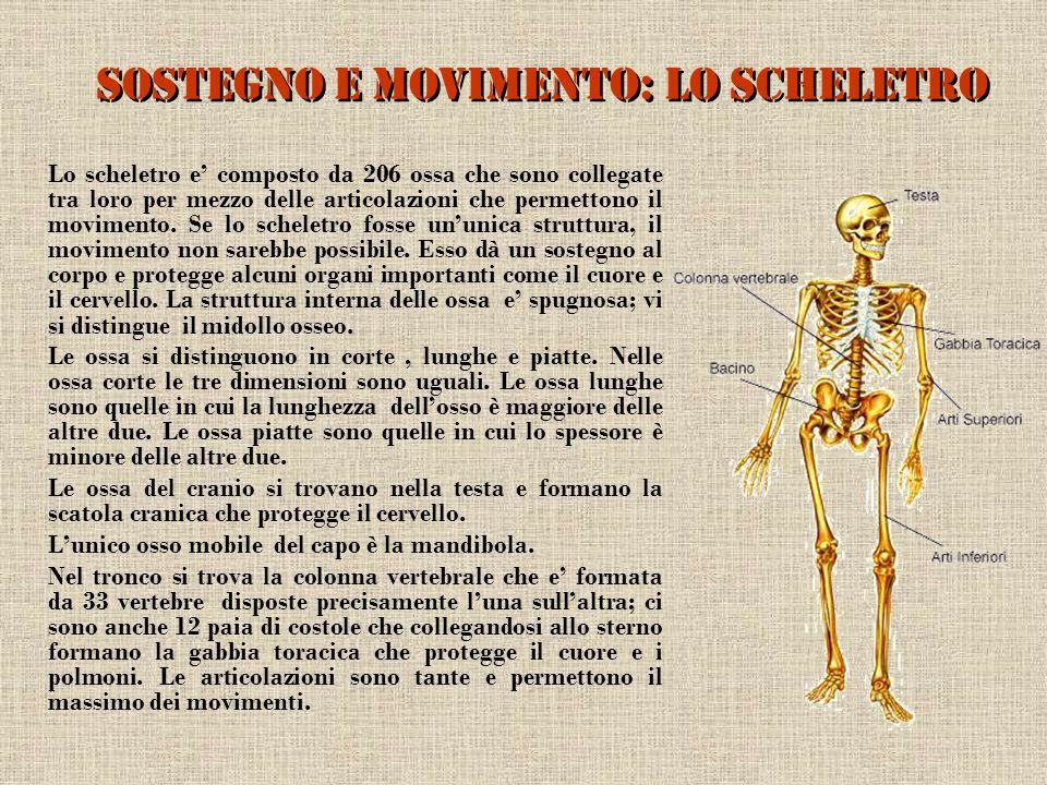 Sostegno e movimento: lo scheletro