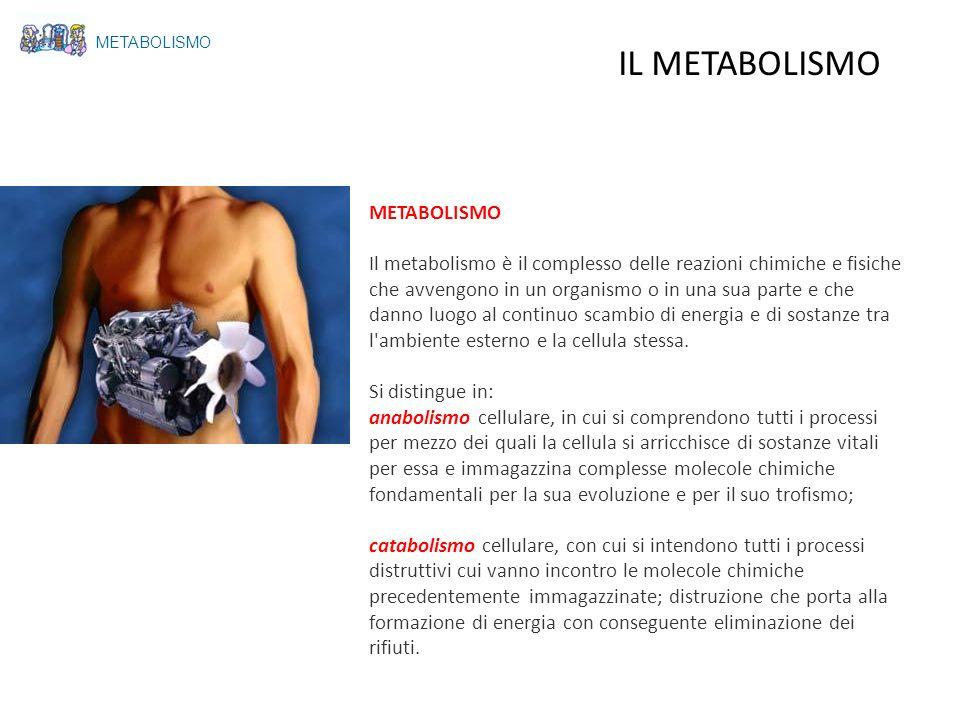 IL METABOLISMO METABOLISMO