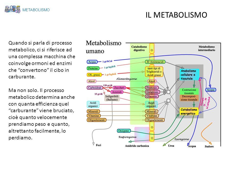 METABOLISMO IL METABOLISMO.