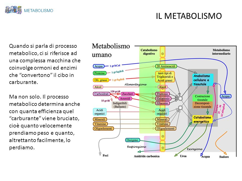 METABOLISMOIL METABOLISMO.