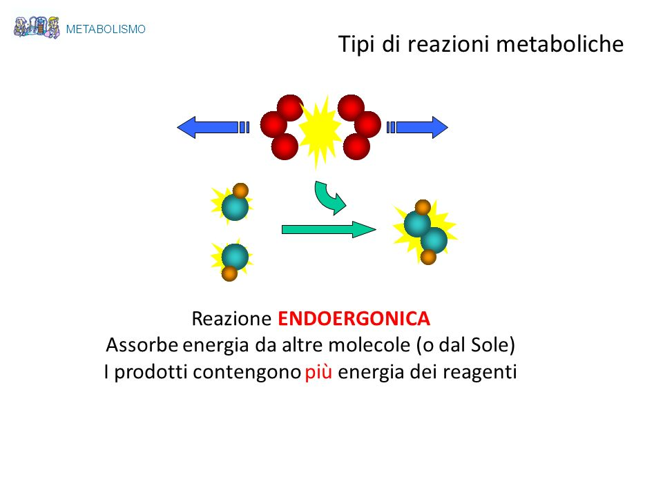 Tipi di reazioni metaboliche