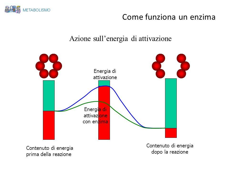 Come funziona un enzima