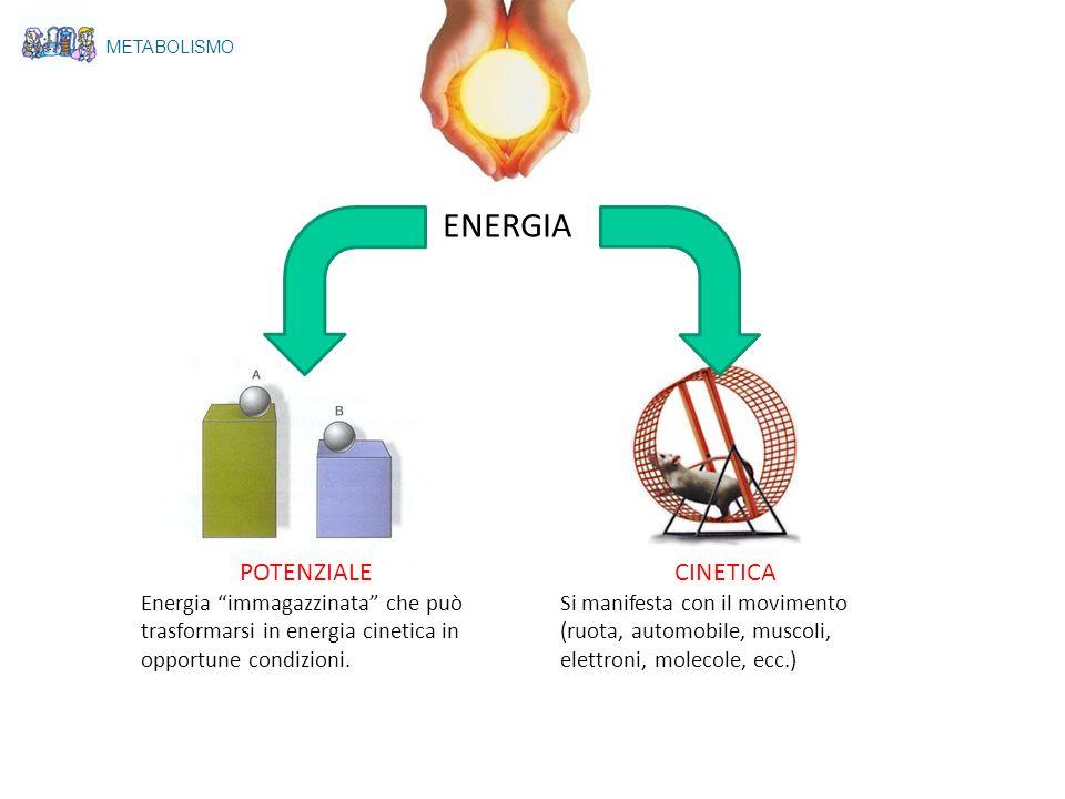 ENERGIA POTENZIALE CINETICA