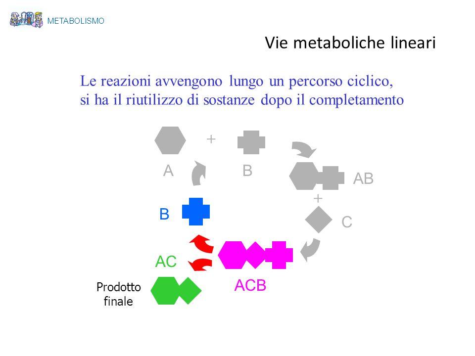 Vie metaboliche lineari