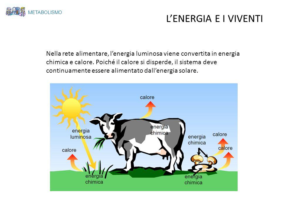METABOLISMO L'ENERGIA E I VIVENTI.