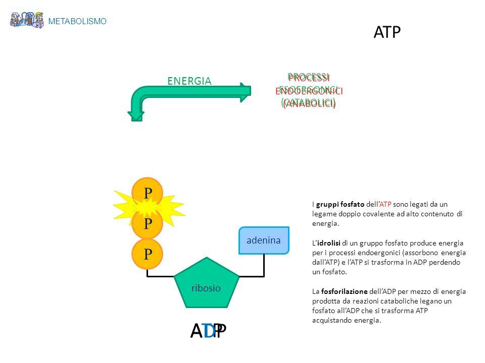 ADP ATP ATP P P P ENERGIA PROCESSI PROCESSI ENDOERGONICI ESOERGONICI