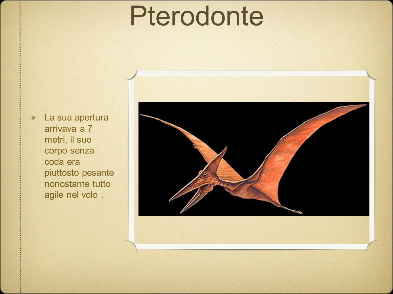 Pterodonte La sua apertura arrivava a 7 metri, il suo corpo senza coda era piuttosto pesante nonostante tutto agile nel volo .