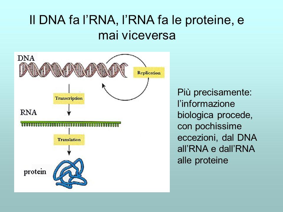 Il DNA fa l'RNA, l'RNA fa le proteine, e mai viceversa