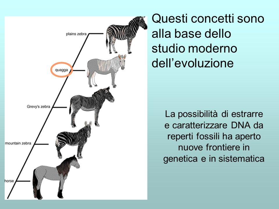 Questi concetti sono alla base dello studio moderno dell'evoluzione