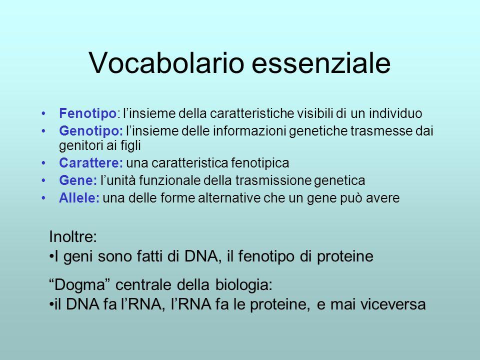 Vocabolario essenziale