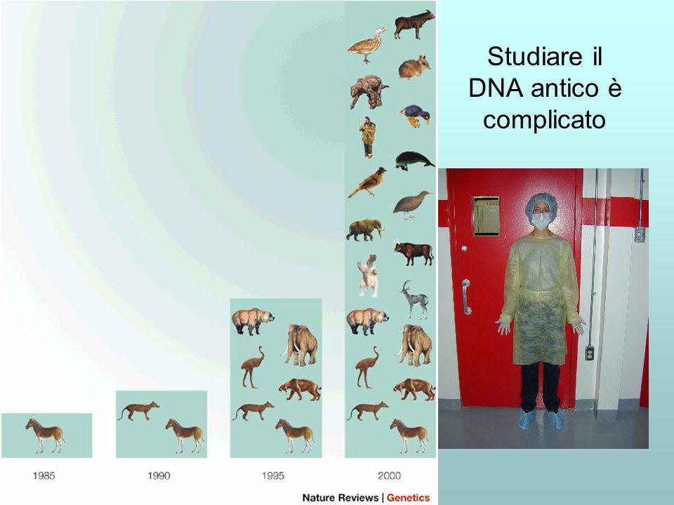 Studiare il DNA antico è complicato