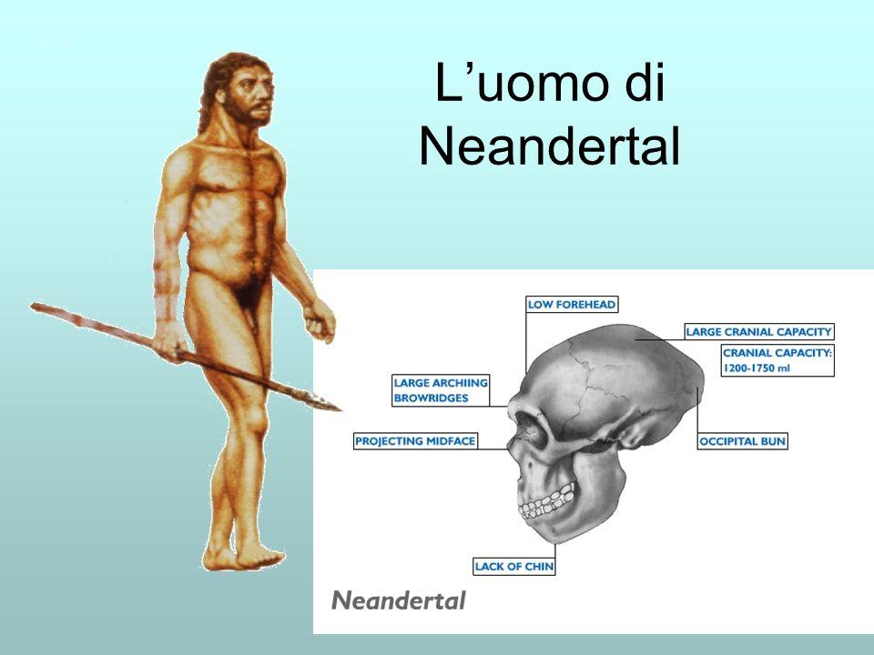 L'uomo di Neandertal