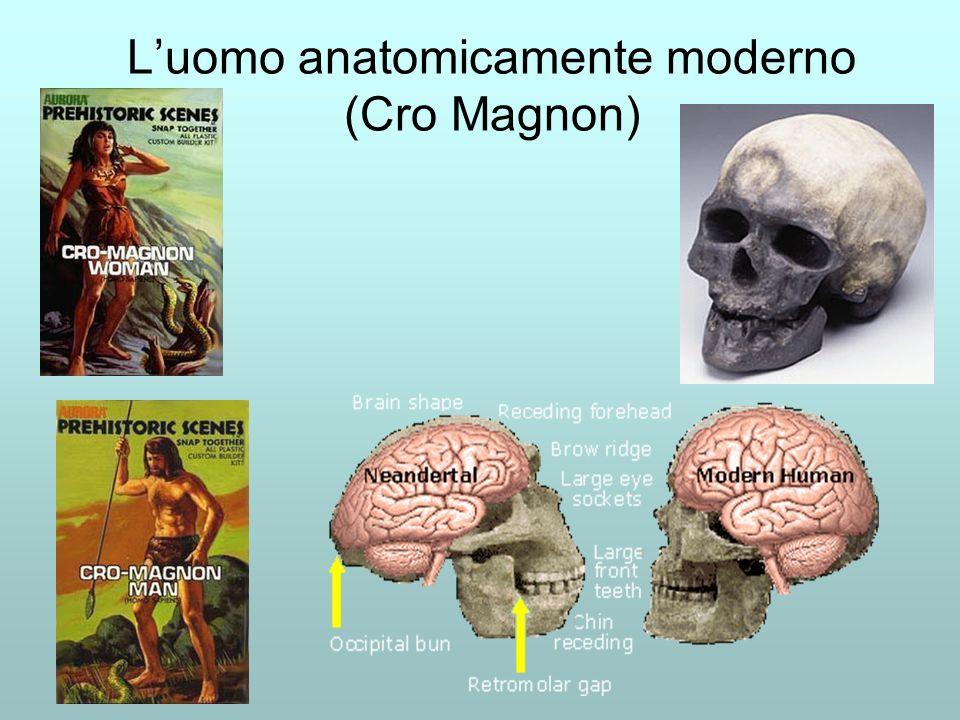 L'uomo anatomicamente moderno (Cro Magnon)