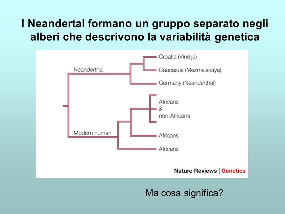 I Neandertal formano un gruppo separato negli alberi che descrivono la variabilità genetica