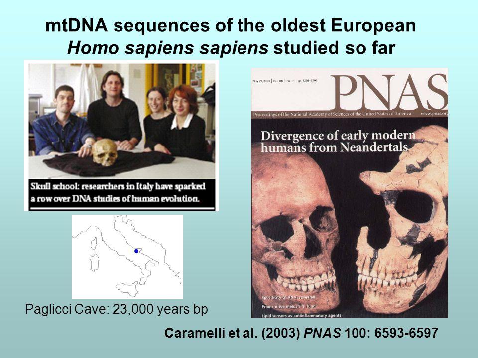 mtDNA sequences of the oldest European Homo sapiens sapiens studied so far