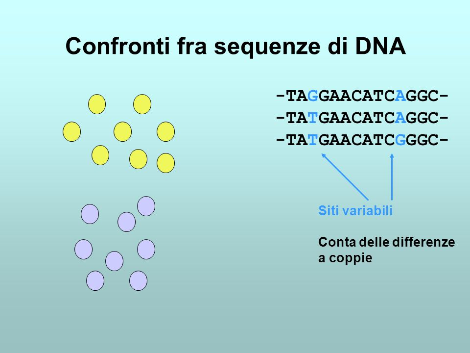Confronti fra sequenze di DNA