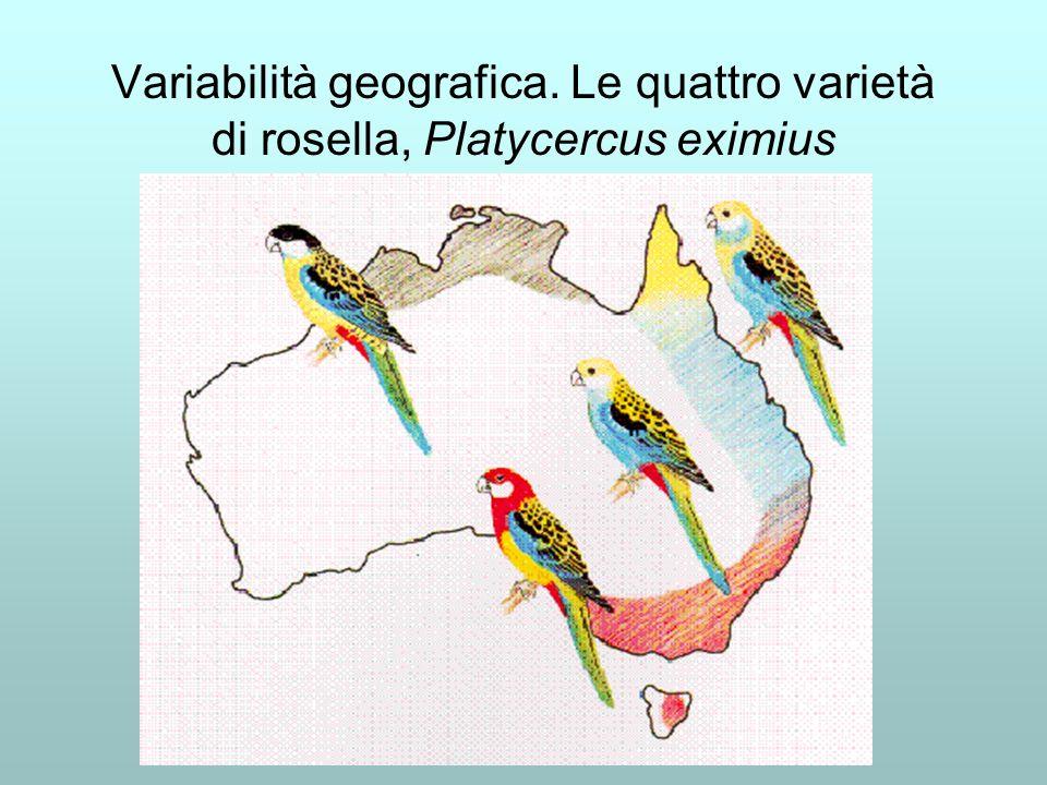 Variabilità geografica