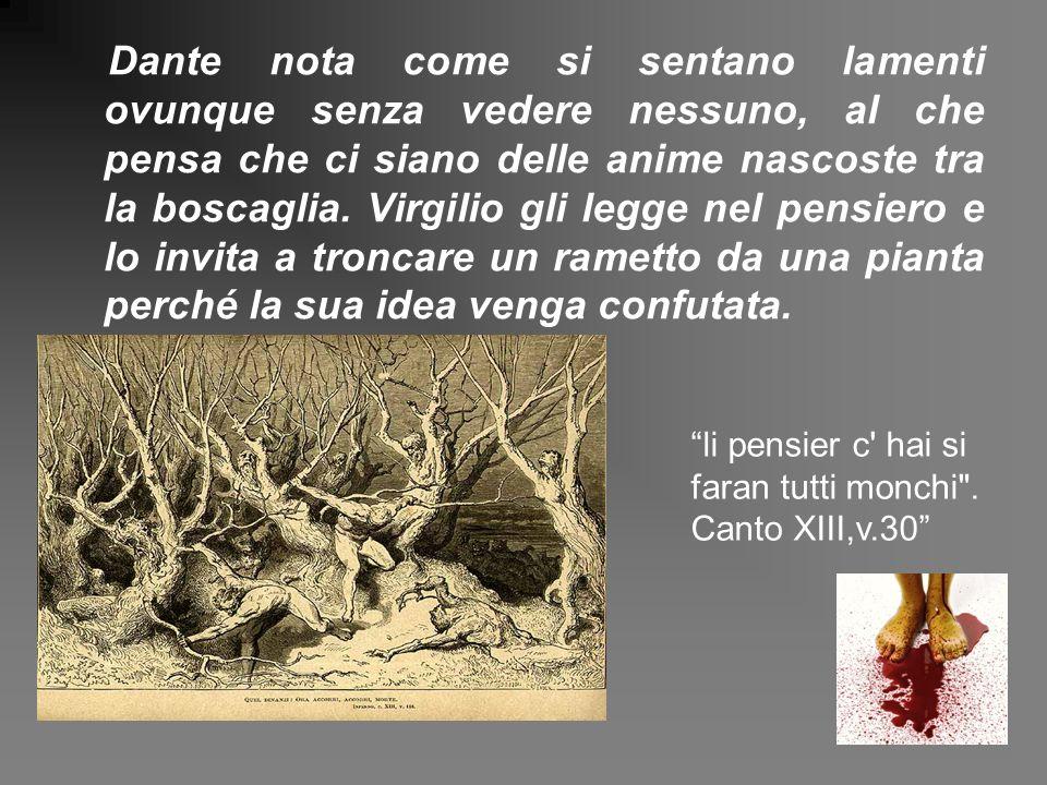Dante nota come si sentano lamenti ovunque senza vedere nessuno, al che pensa che ci siano delle anime nascoste tra la boscaglia. Virgilio gli legge nel pensiero e lo invita a troncare un rametto da una pianta perché la sua idea venga confutata.