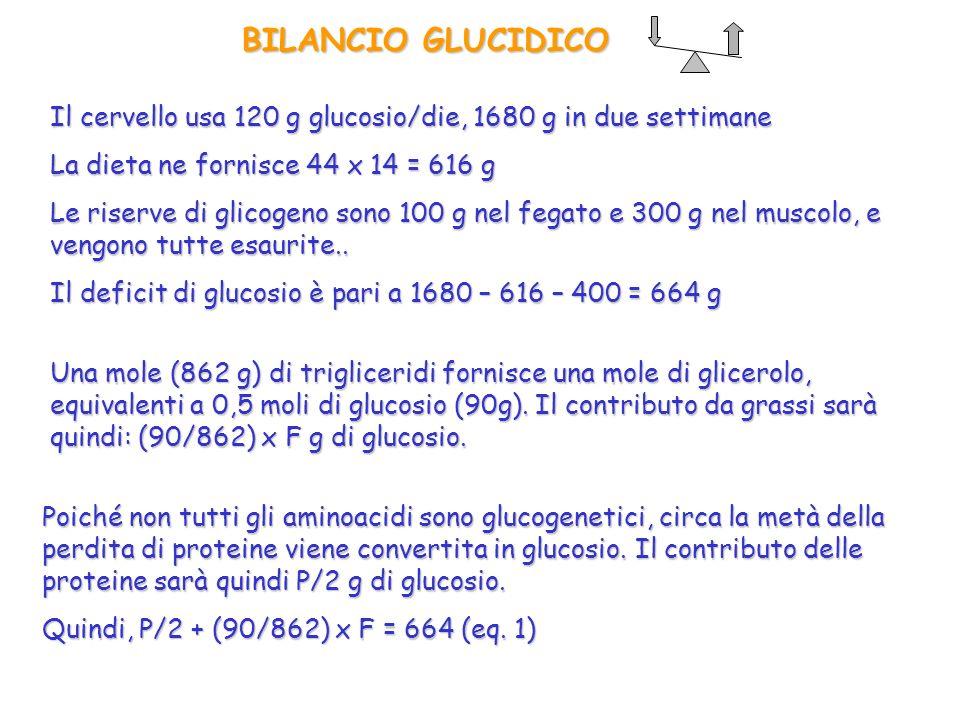 BILANCIO GLUCIDICO Il cervello usa 120 g glucosio/die, 1680 g in due settimane. La dieta ne fornisce 44 x 14 = 616 g.