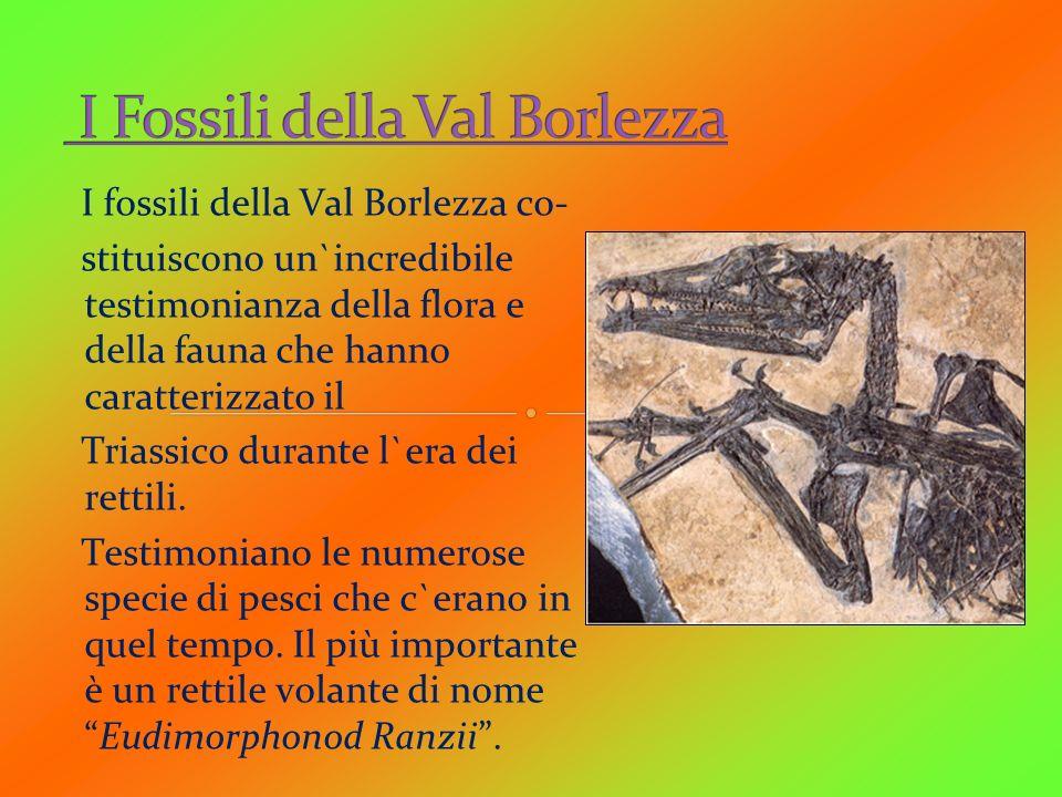 I Fossili della Val Borlezza
