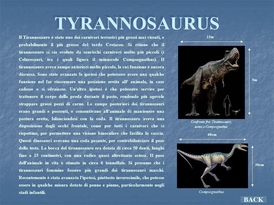 Confronto fra: Tirannosauro,