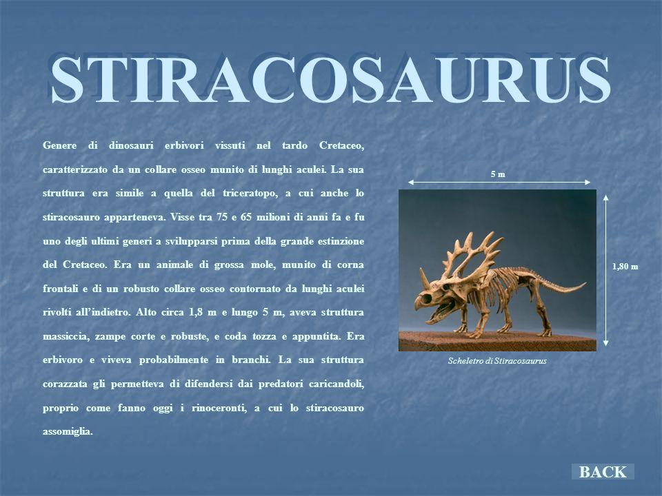 Scheletro di Stiracosaurus
