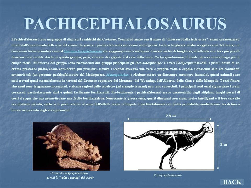 PACHICEPHALOSAURUS BACK 5-6 m 3 m