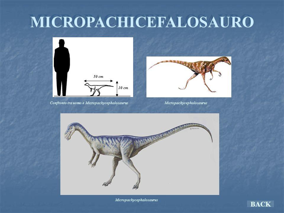MICROPACHICEFALOSAURO