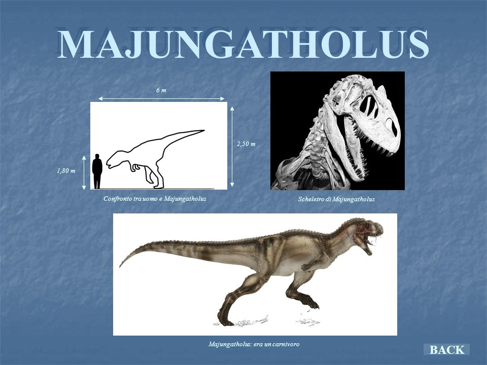 MAJUNGATHOLUS BACK 6 m 2,50 m 1,80 m