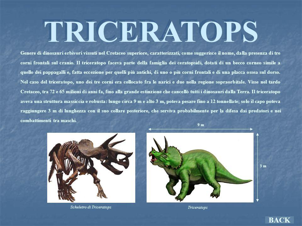 Scheletro di Triceratops