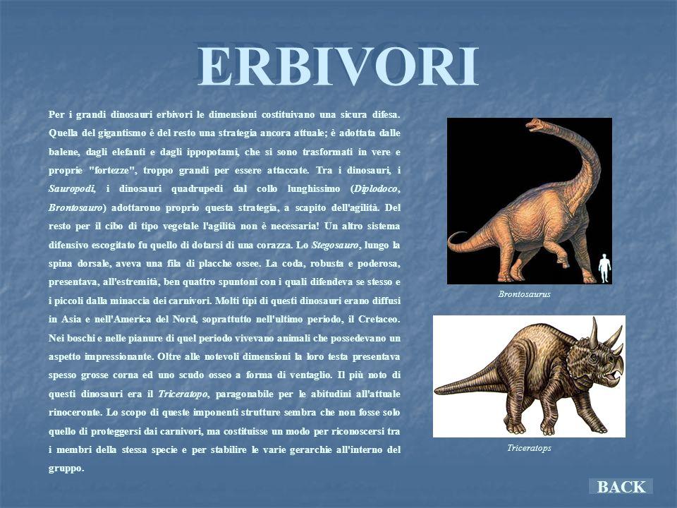 ERBIVORI