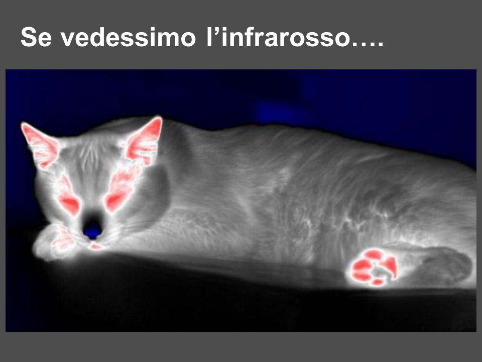 Se vedessimo l'infrarosso….