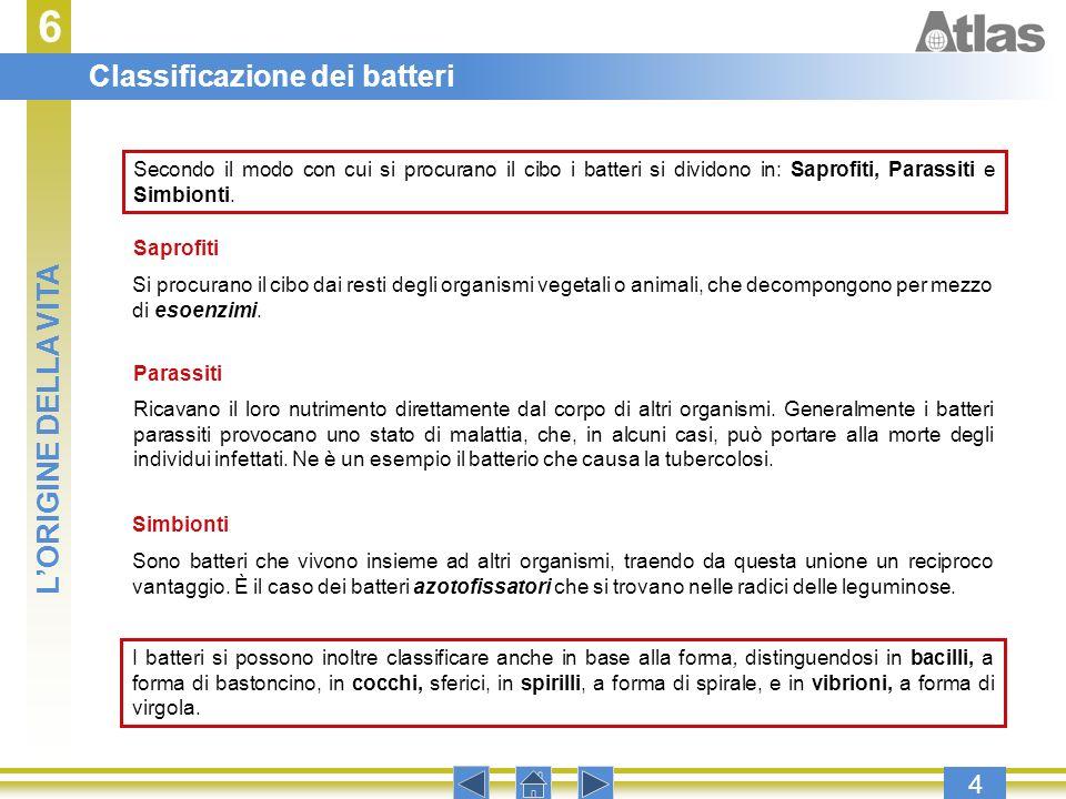 6 Classificazione dei batteri L'ORIGINE DELLA VITA 4