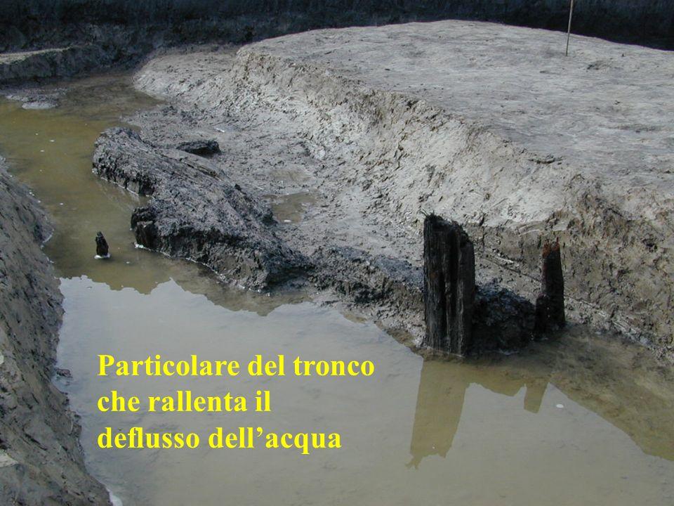 Particolare del tronco che rallenta il deflusso dell'acqua