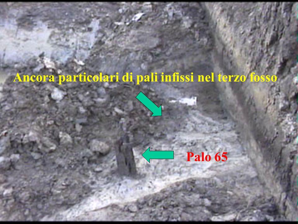 Ancora particolari di pali infissi nel terzo fosso