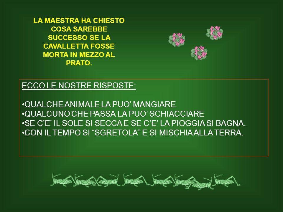 ECCO LE NOSTRE RISPOSTE: QUALCHE ANIMALE LA PUO' MANGIARE