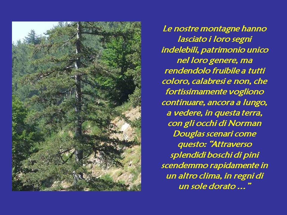 Le nostre montagne hanno lasciato i loro segni indelebili, patrimonio unico nel loro genere, ma rendendolo fruibile a tutti coloro, calabresi e non, che fortissimamente vogliono continuare, ancora a lungo, a vedere, in questa terra, con gli occhi di Norman Douglas scenari come questo: Attraverso splendidi boschi di pini scendemmo rapidamente in un altro clima, in regni di un sole dorato …