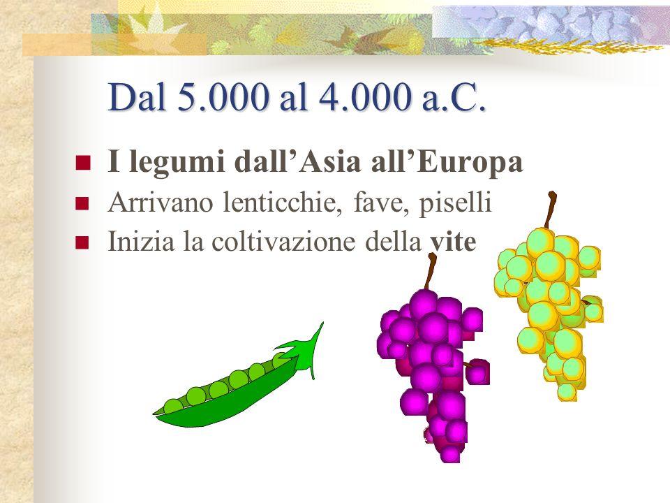 Dal 5.000 al 4.000 a.C. I legumi dall'Asia all'Europa